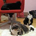 All Three Cats