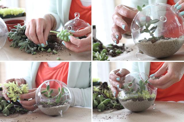 How To Make A Succulent Sea Terrarium