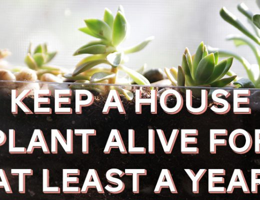 Keep a House Plant Alive for At Least a Year