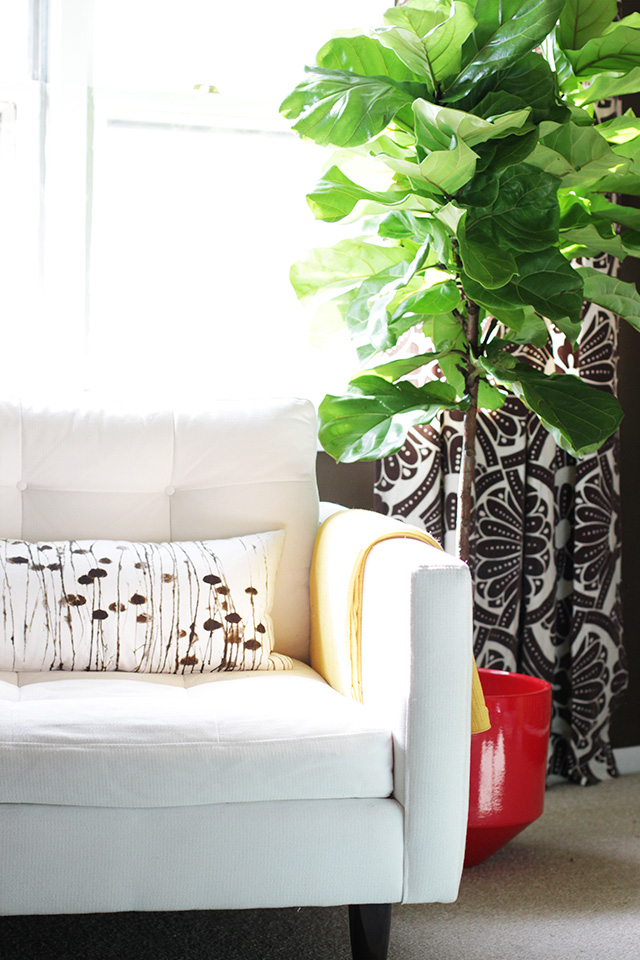 A Fiddle-Leaf Fig Tree in Making it Lovely's Library
