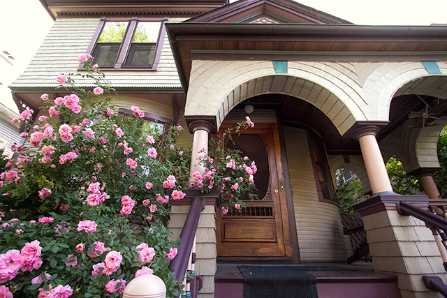 Pink Roses on the Front Porch