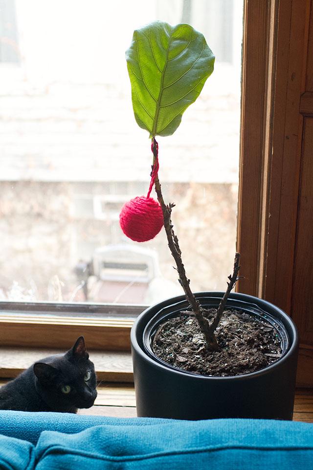 Festive Fiddle Leaf Fig