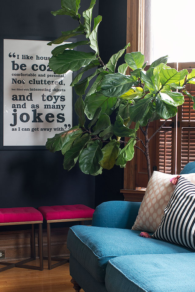 Black Walls, Fiddle Leaf Fig #makingitlovely