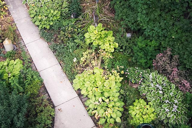 The Garden, Last Year