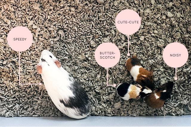 Speedy, Butterscotch, Cute-Cute, and Noisy