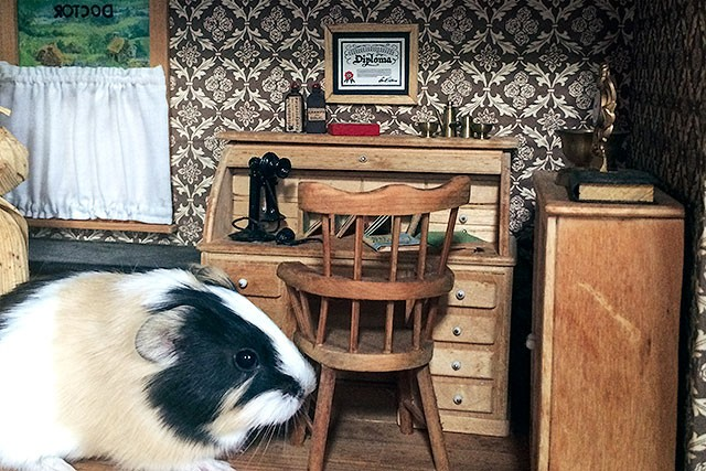 Butterscotch the Guinea Pig in a Dollhouse