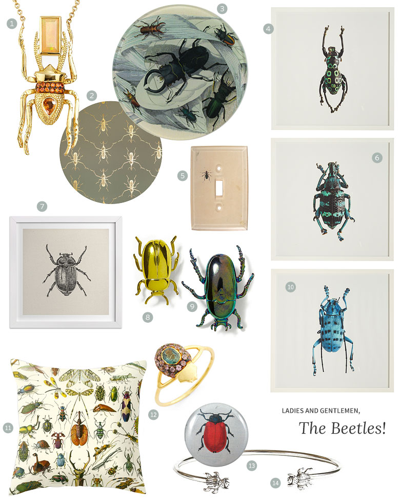 Meet the Beetles