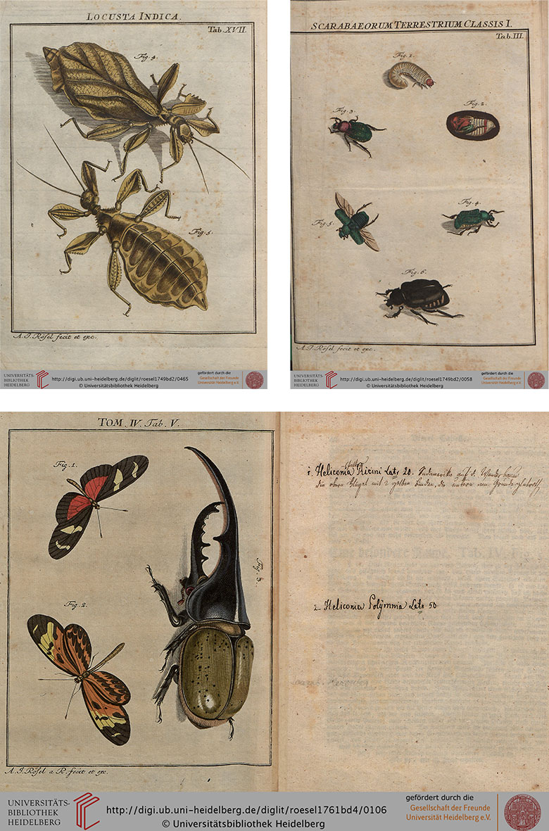 Antique Illustrations of Insects from the 1700s by Rösel Von Rosenhof