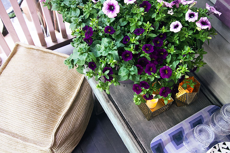Back Porch Flowers and an Outdoor Pouf