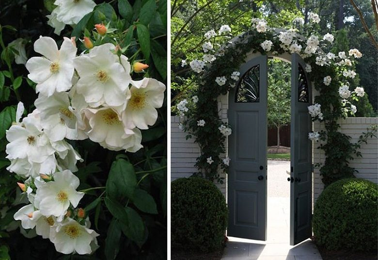 Garden Arch Covered in Roses