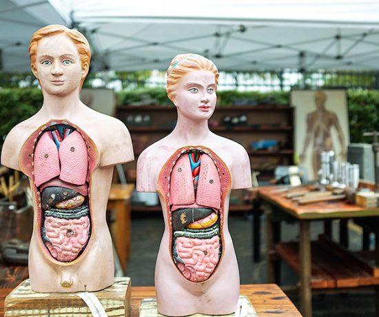 Vintage Anatomical Models