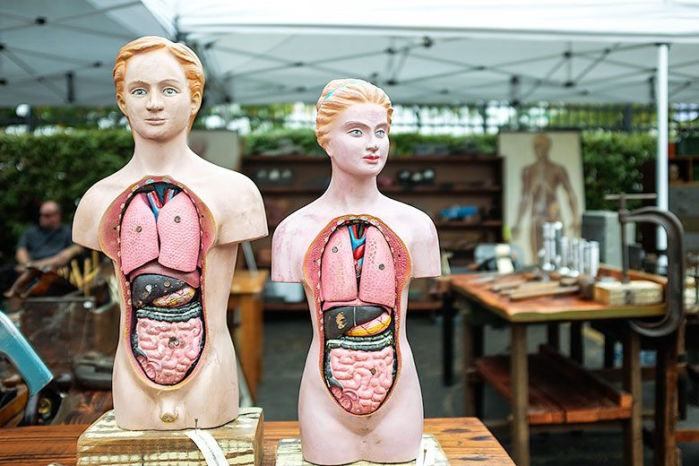 Vintage Anatomical Models
