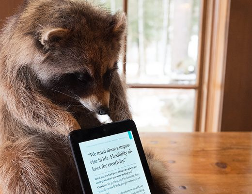 Even raccoons love reading on a NOOK!