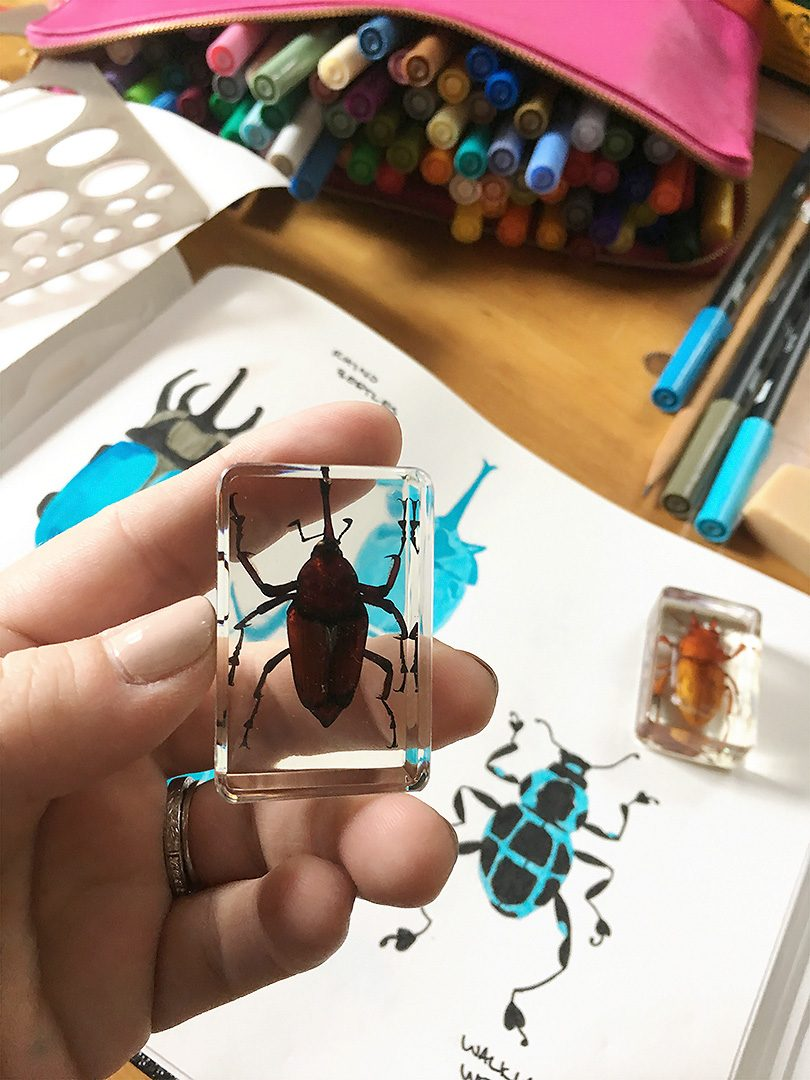 Drawing from a Weevil Specimen | Making it Lovely