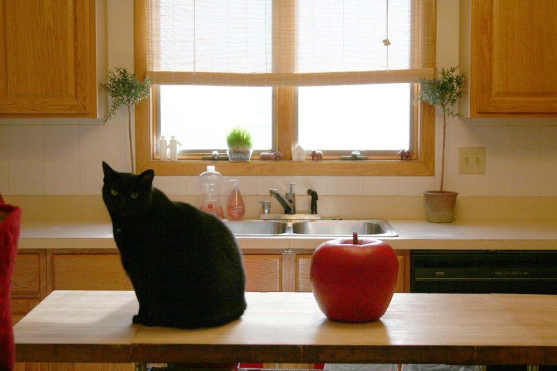 Big Cat, Big Apple