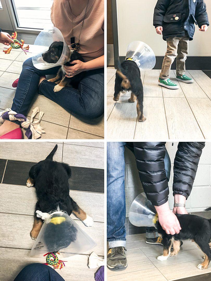 Adopting A Shelter Puppy Dog