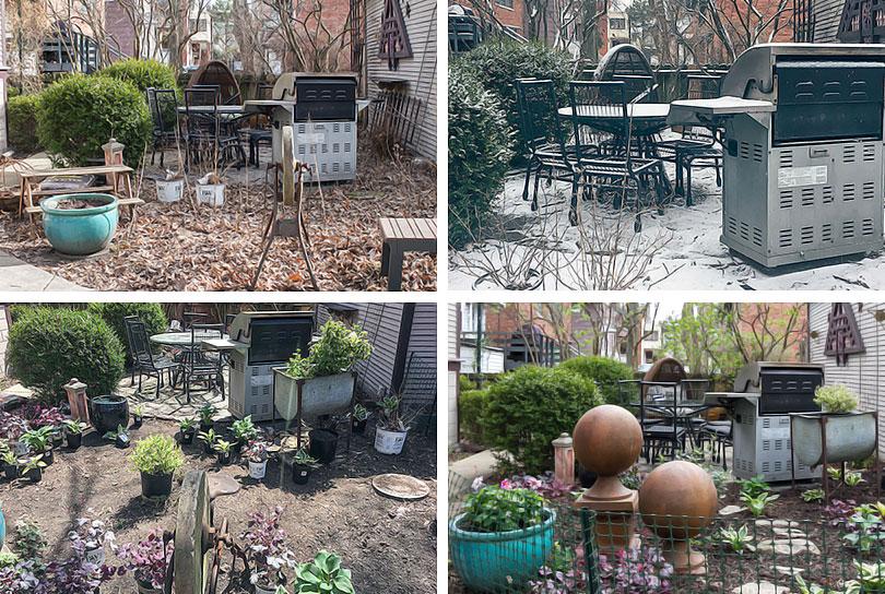 Backyard Garden Progress