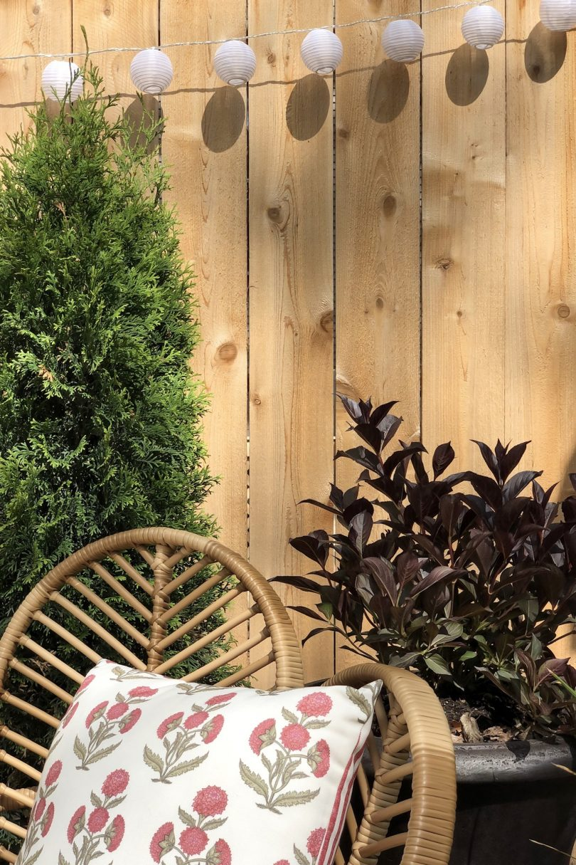 Arborvitae and Wine & Roses Weigela in Planters | Making it Lovely
