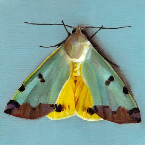 Moth by Tali Yalonetzki from Artfully Walls