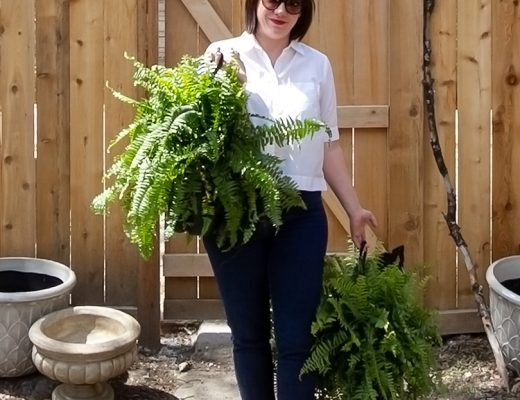 Ferns for the Yard