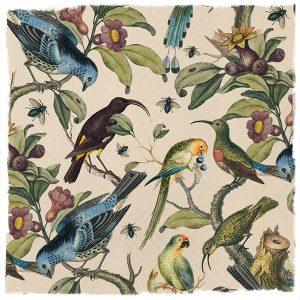 Ornithology Wallpaper, Milton & King