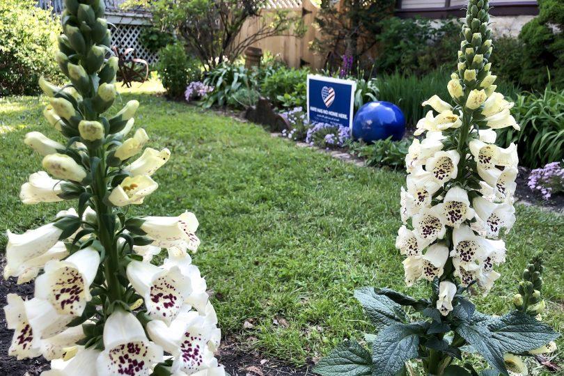 Foxglove and Perennial Flower Garden