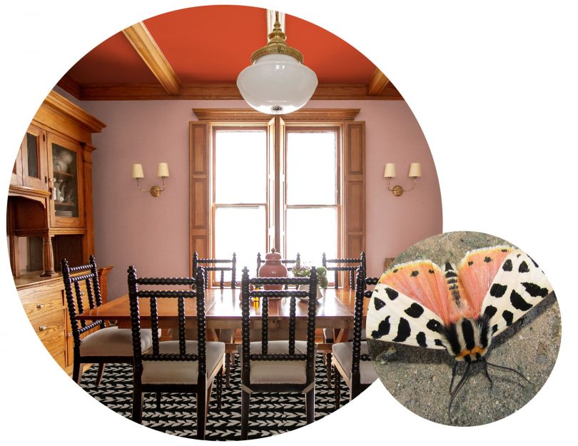 A Moth-inspired Dining Room | Making it Lovely