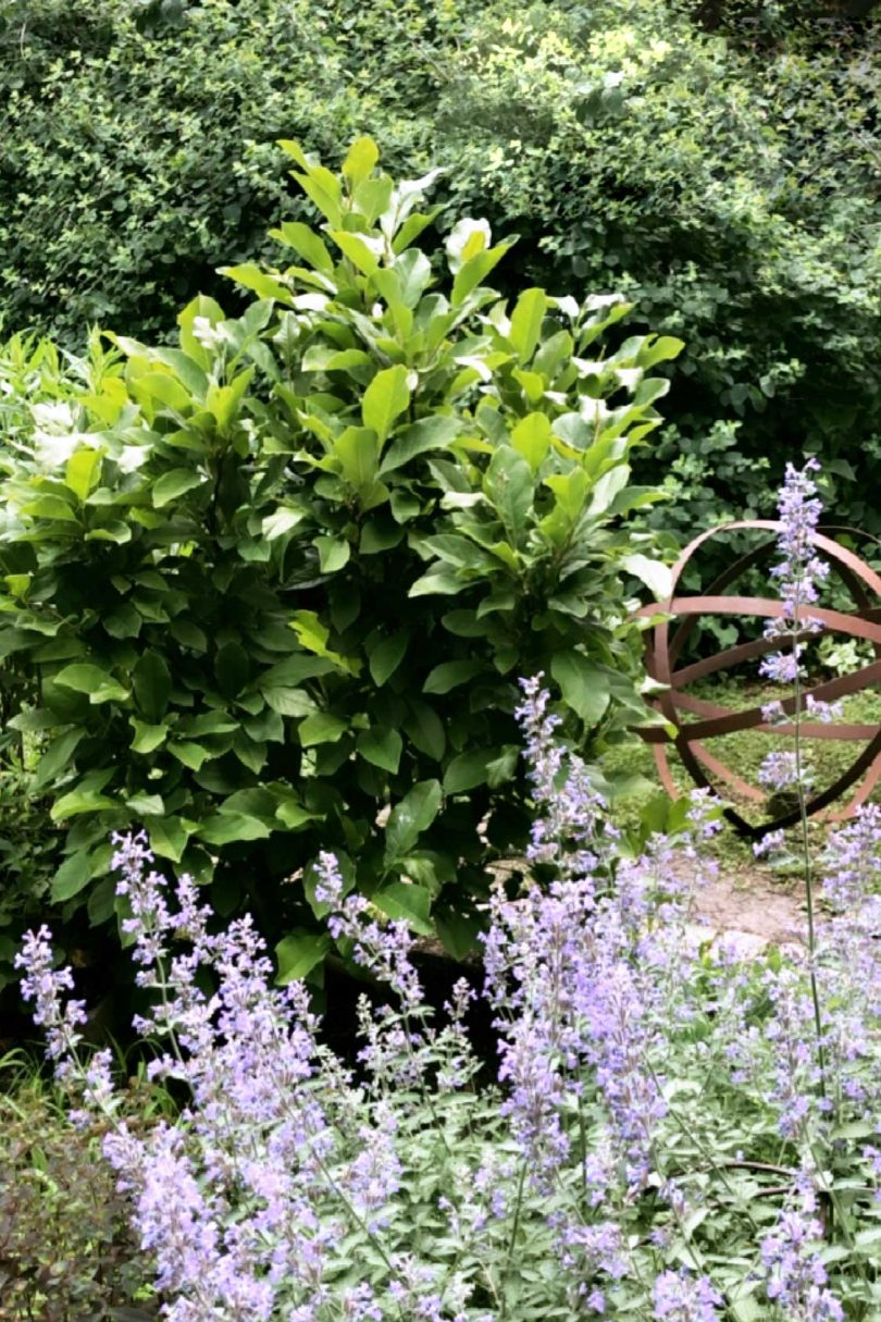 Ann Magnolia and Catmint with Garden Sphere Sculpture | Making it Lovely
